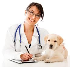 Planos de saúde para veterinários SP